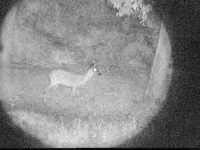 Noční pozorování zvěře digitálním nočním viděním